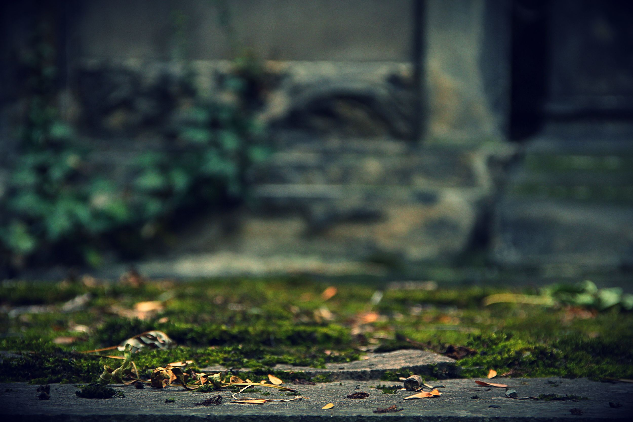 Exploring Old Cemeteries in Praha leads to a good roll of film