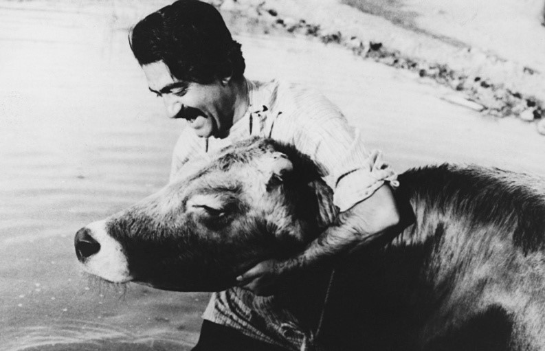 Fig 9. The Cow, Darius Mehrjui, 1969