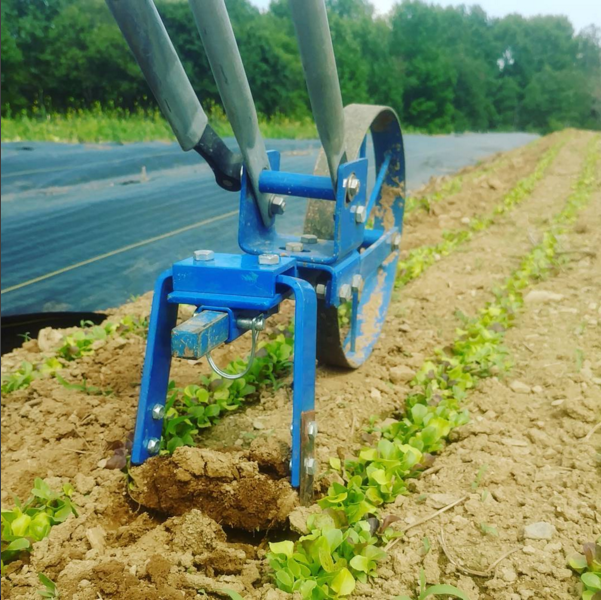 A Valley Oak wheel hoe to cultivate between direct-seeded salad greens.