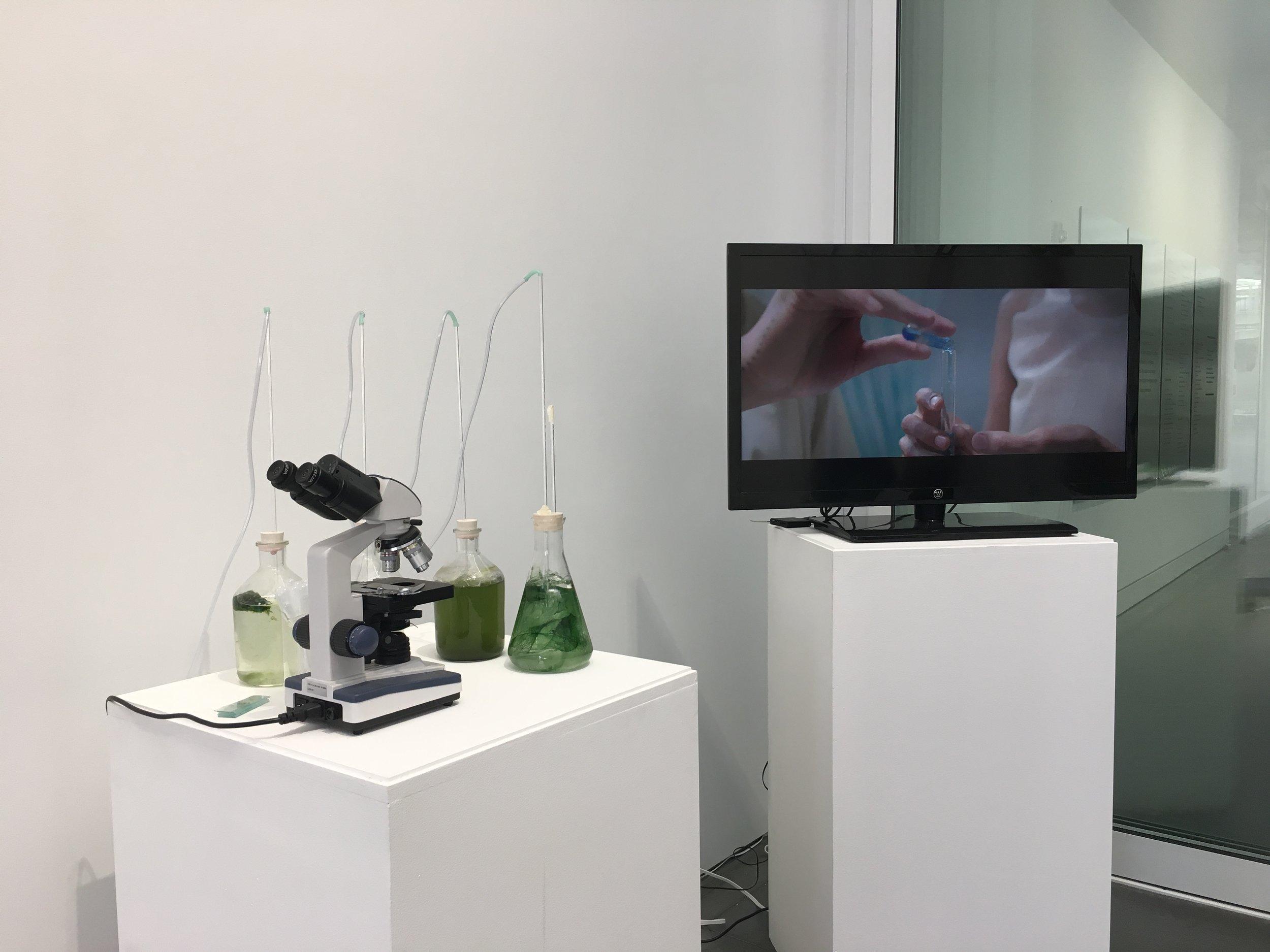 2nd exhibition of Cyanovisions at Leonardo's 50th Anniversary Celebration at Fort Mason Center in San Francisco