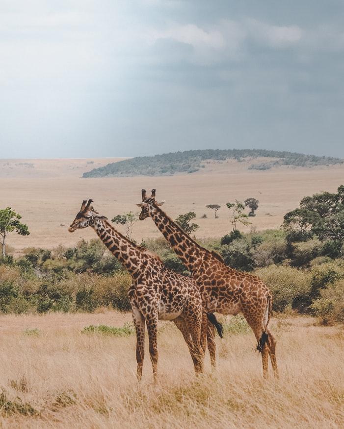 Safari 03.jpg