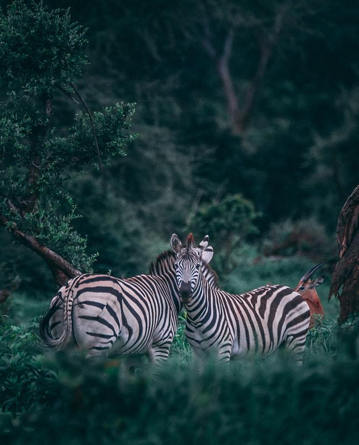 Safari 01.jpg