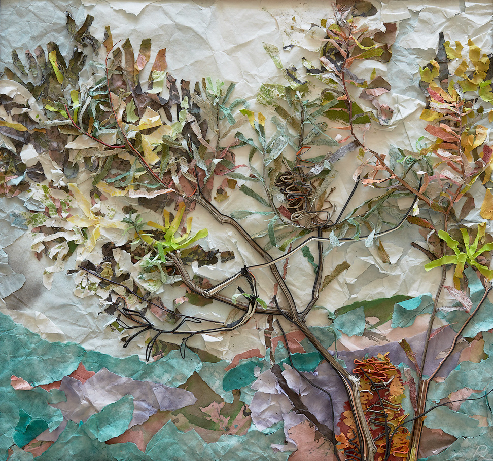 Rieteka Geursen  The Draw of the Outdoors - Banksia Spinulosa 1  2018_chinese scroll paper, cotton matboard and ink