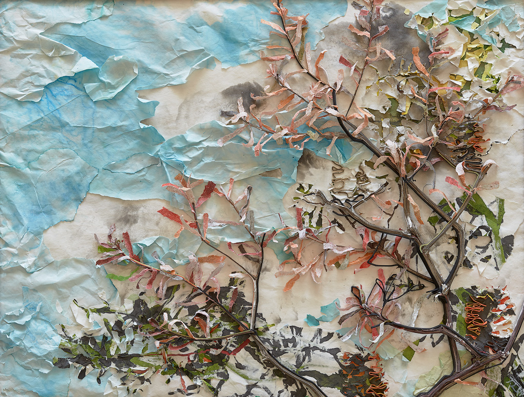 Rieteka Geursen The Draw of the Outdoors - Banksia Spinulosa 2  2018 chinese scroll paper, cotton matboard and ink