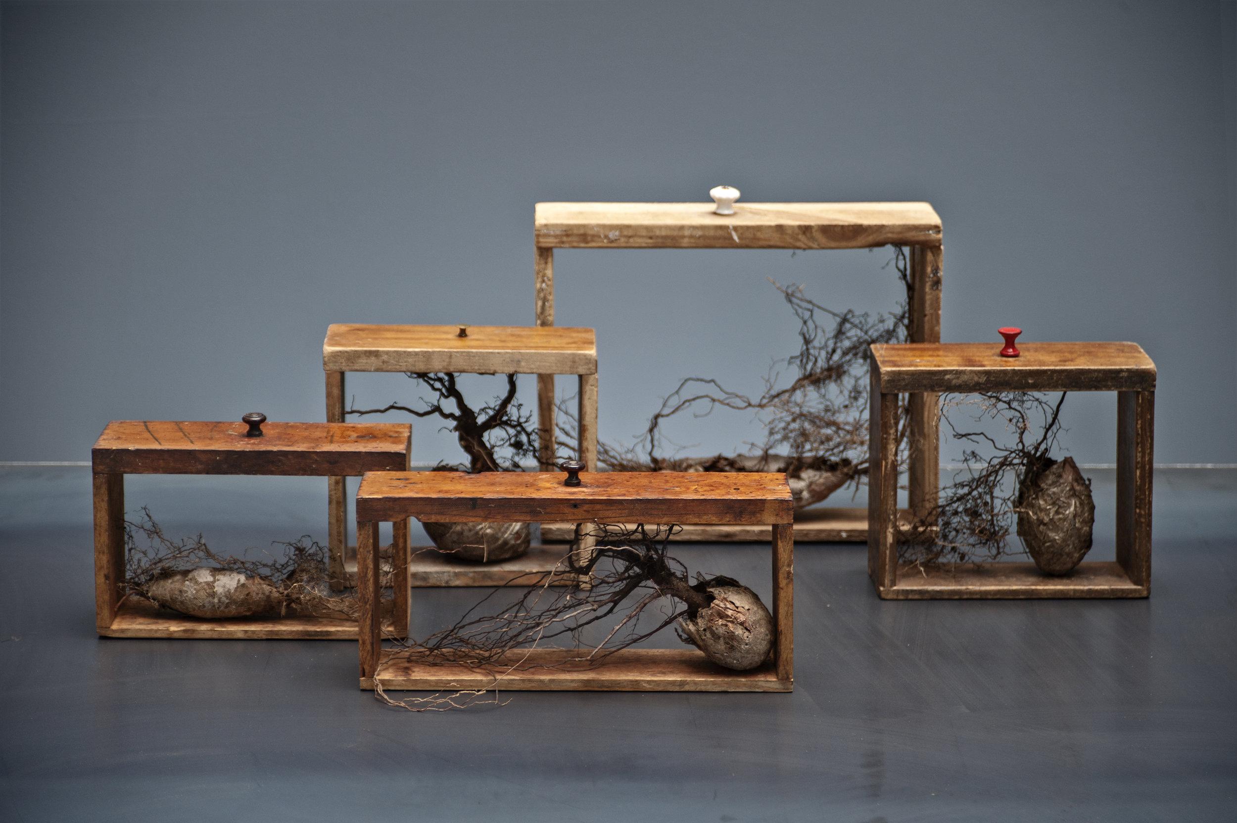 Ann Kristin Aas,  Leaves me, Leaves me not…  Serie naturobjekter. Foto: Kjell S. Stenmarch