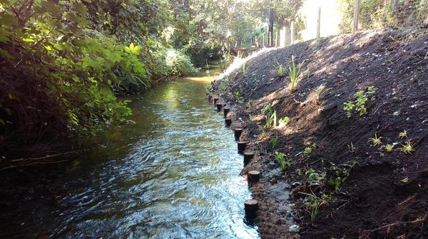 Bio-engineering riverbank protection