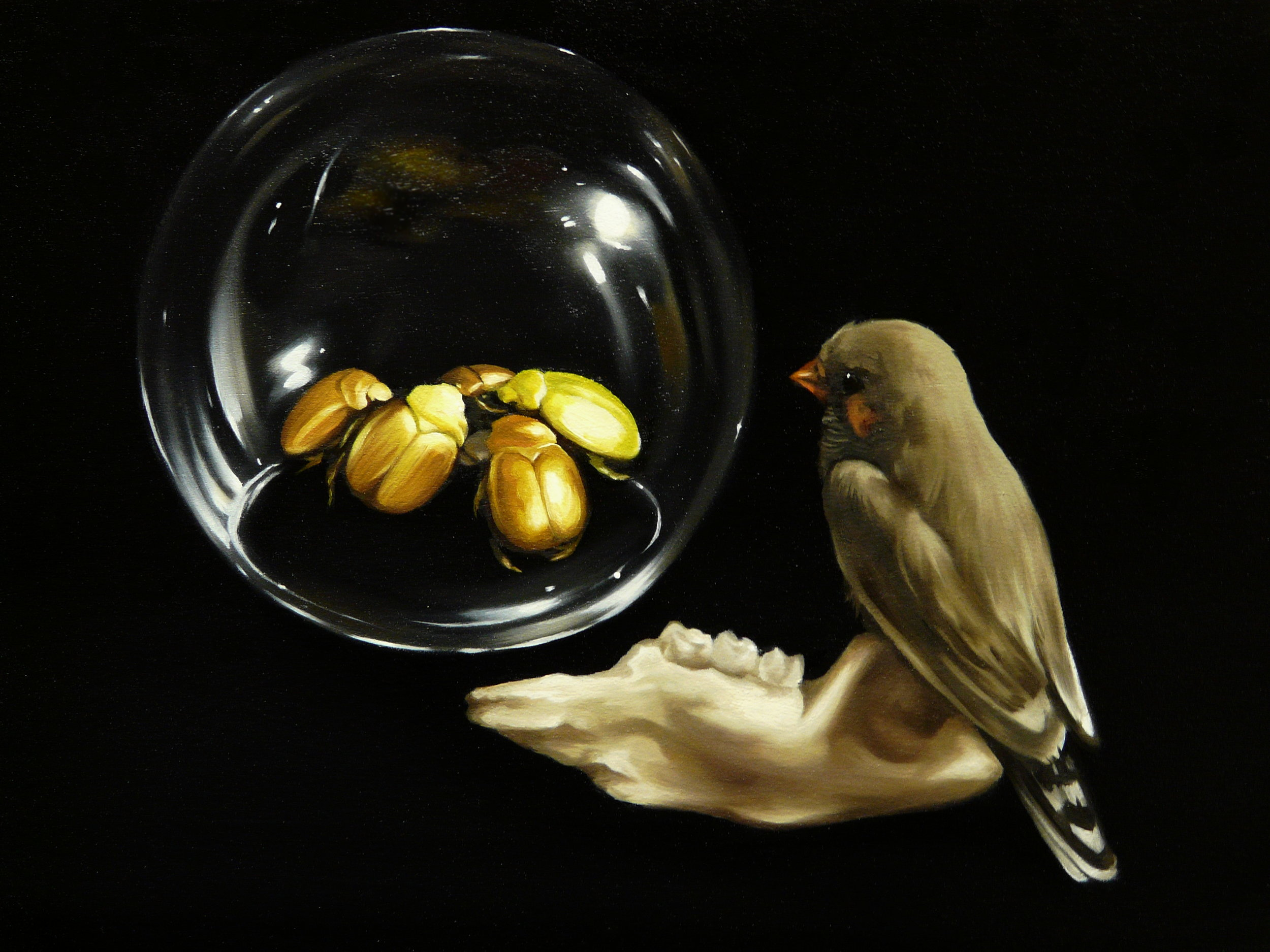 Zebra finch with beetles in glass