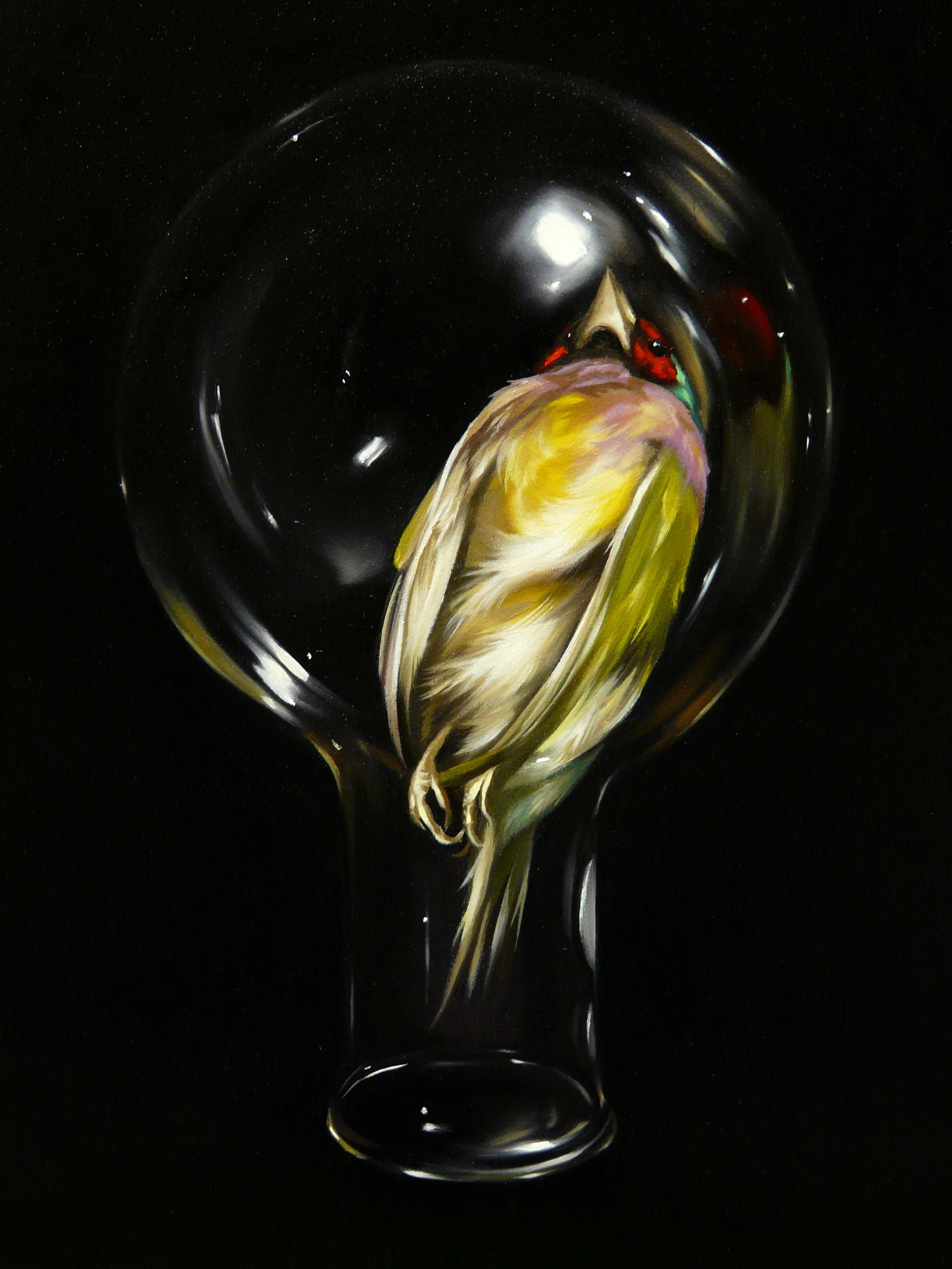 Gouldian in glass