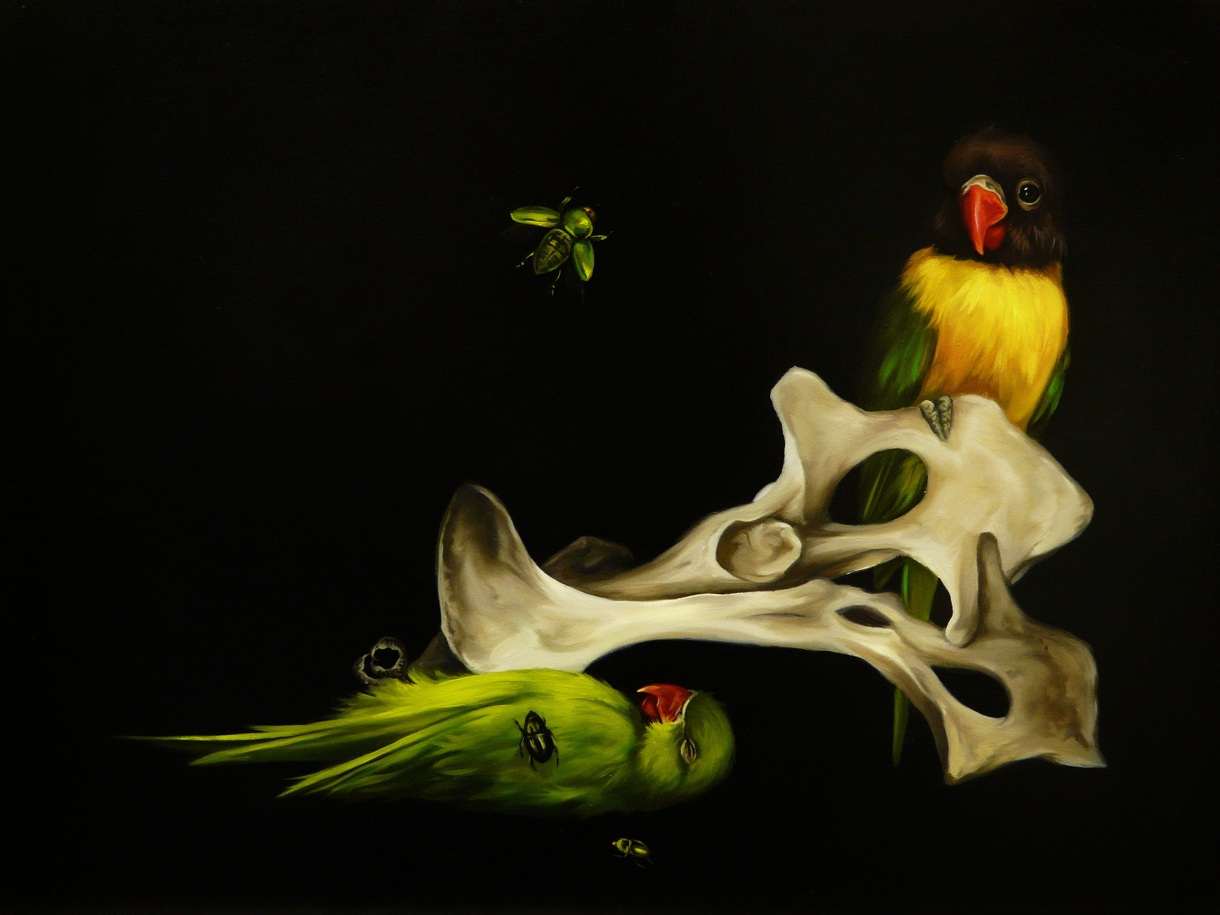 Lovebird, parrot, bones and beetles