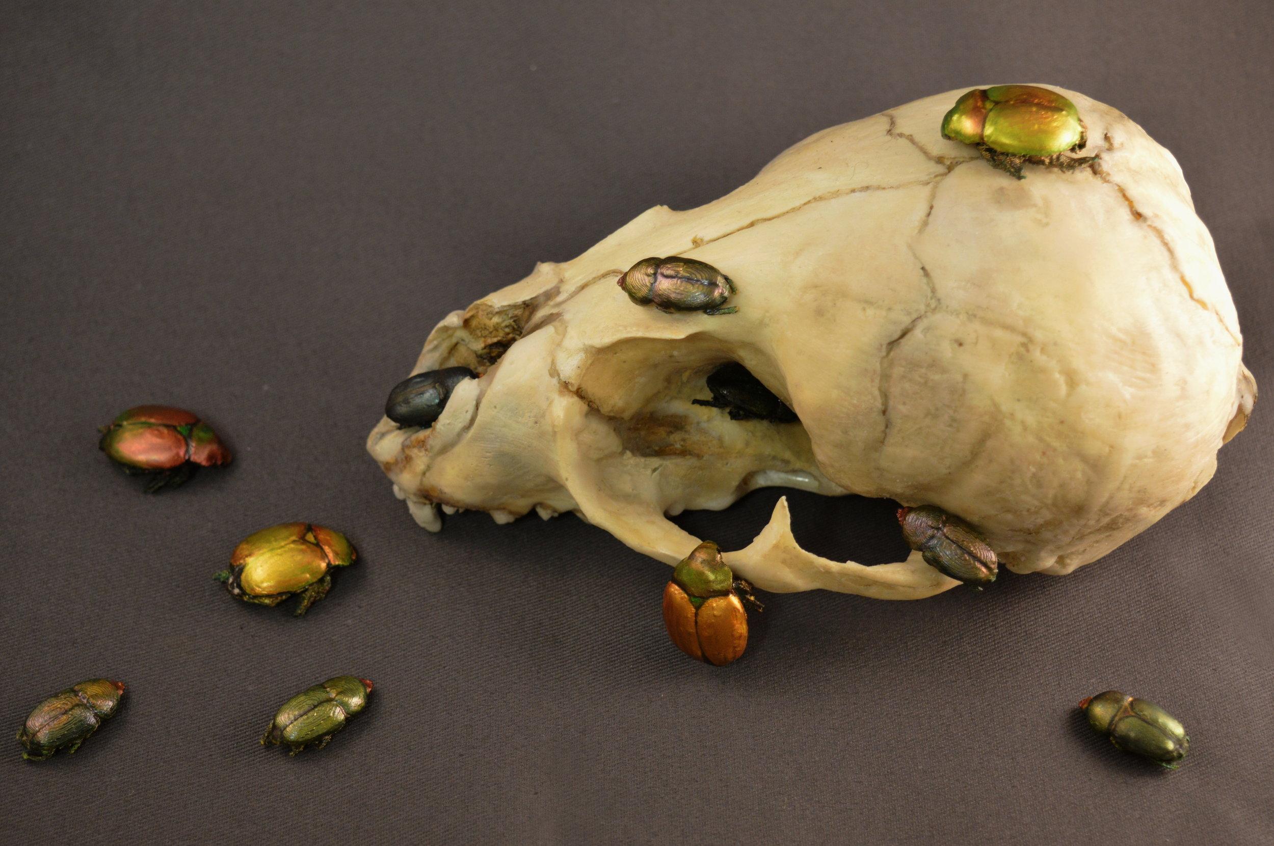 Skull and Beetles ( alternate view)