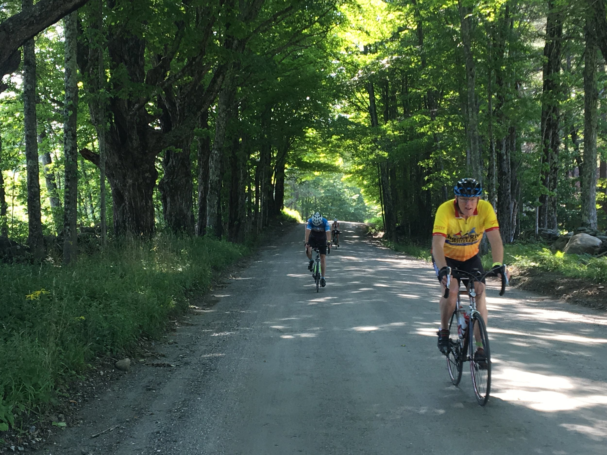 A little gravel road and shady maples