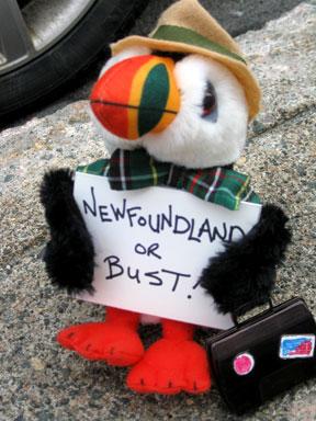 NL or bust