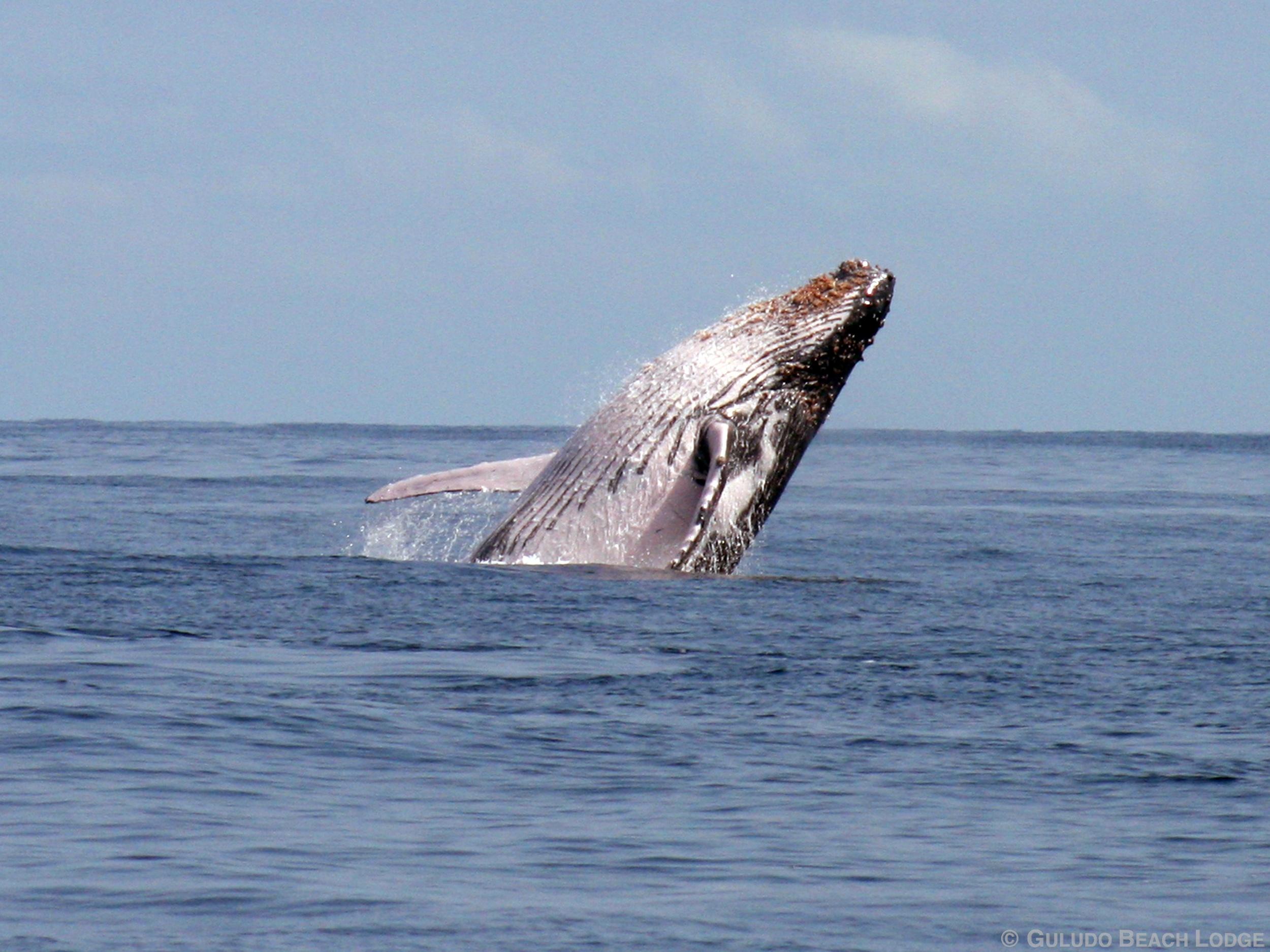 Humpbacks (9).jpg