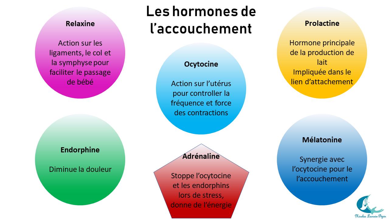 Hormones de l'accouchement