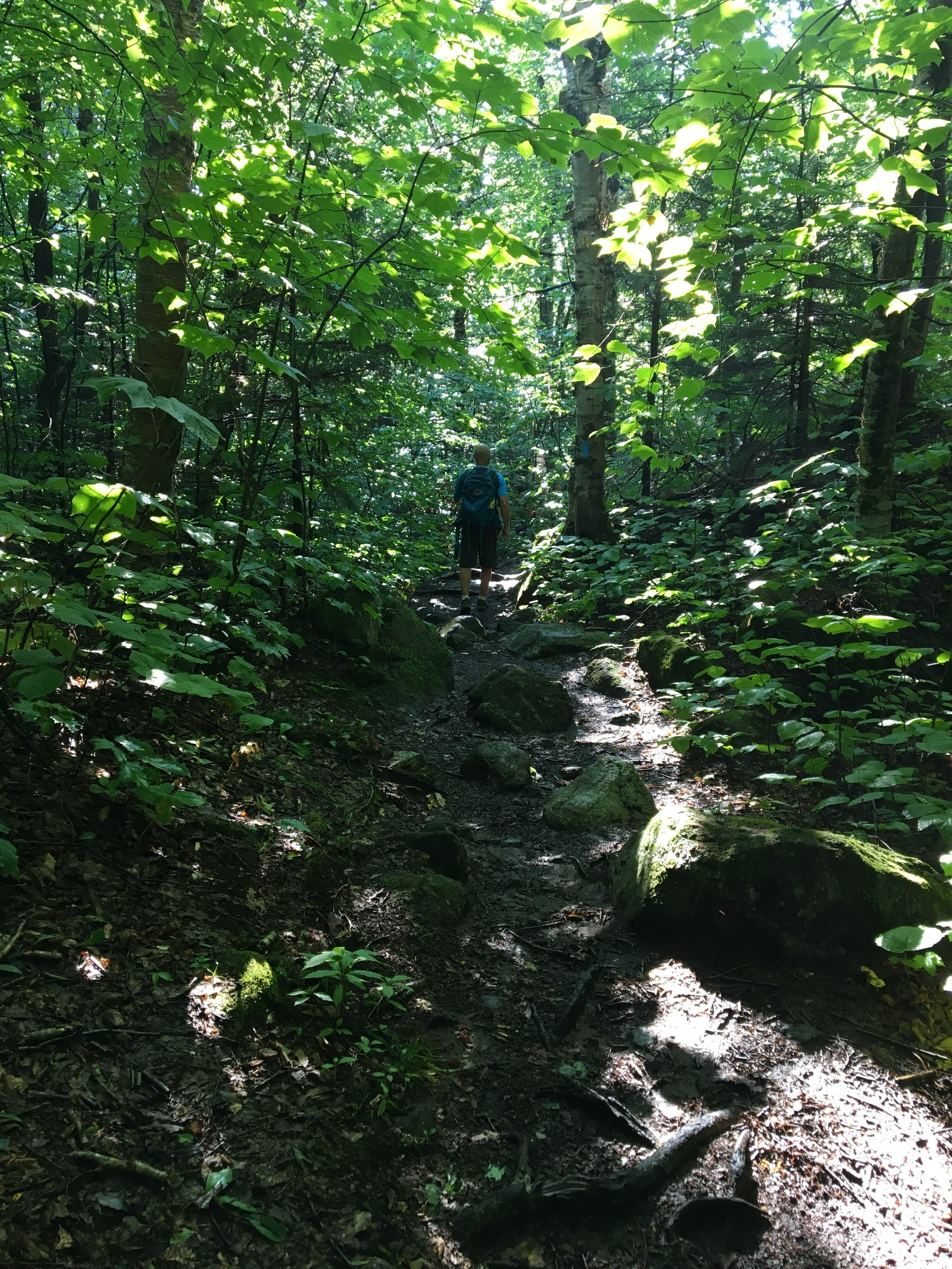Lake Solitude - NH - The Trail.jpg