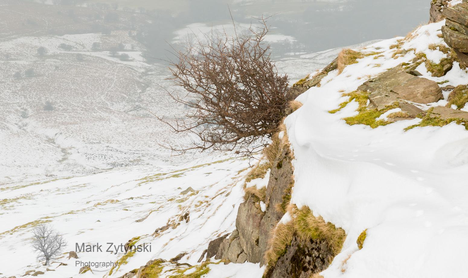 A Winter Walk Blog #3
