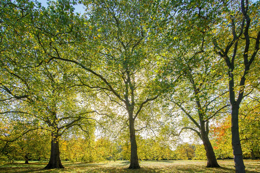 Zytynski_Kensington_Gardens_4217.jpg