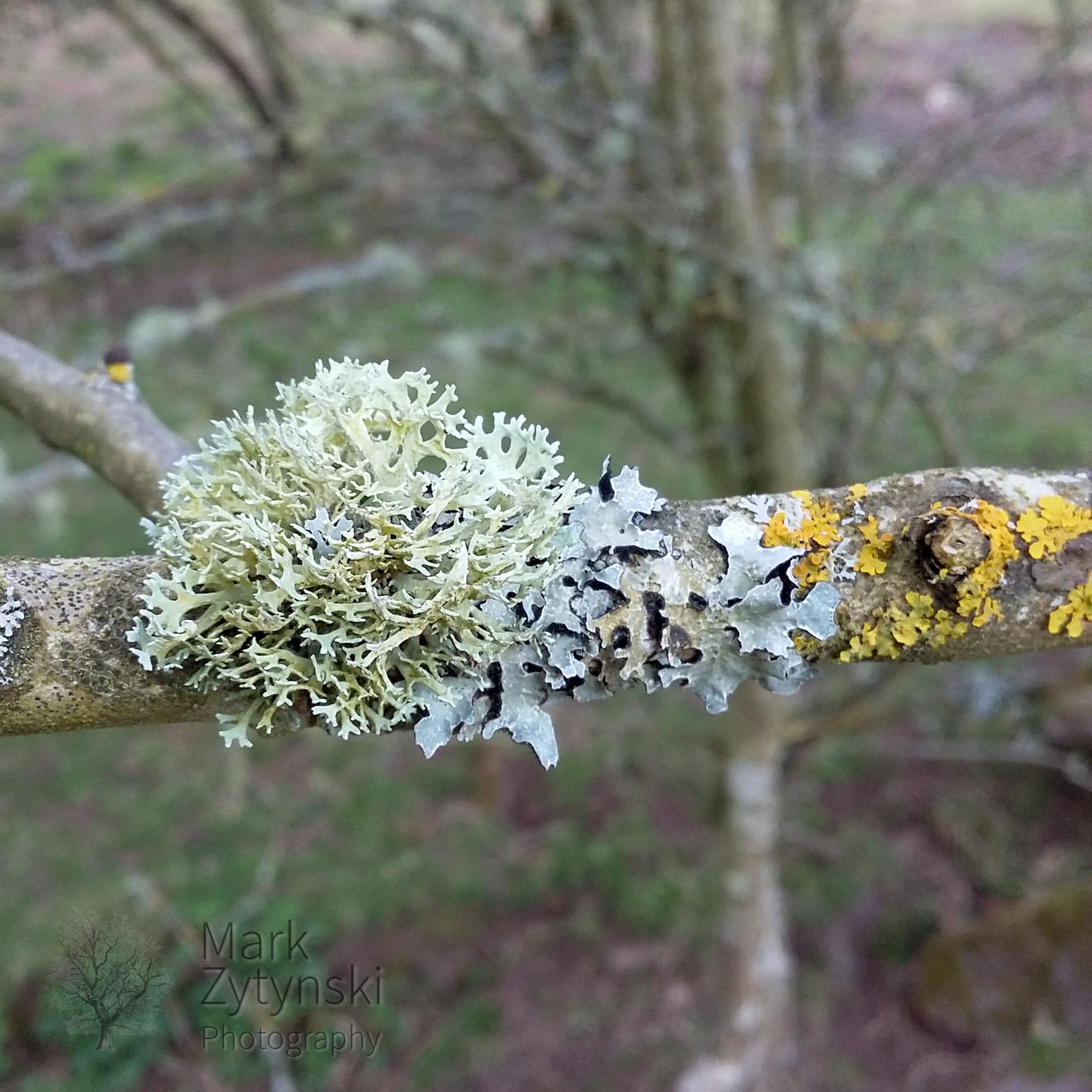 Tree Buds Blog #4