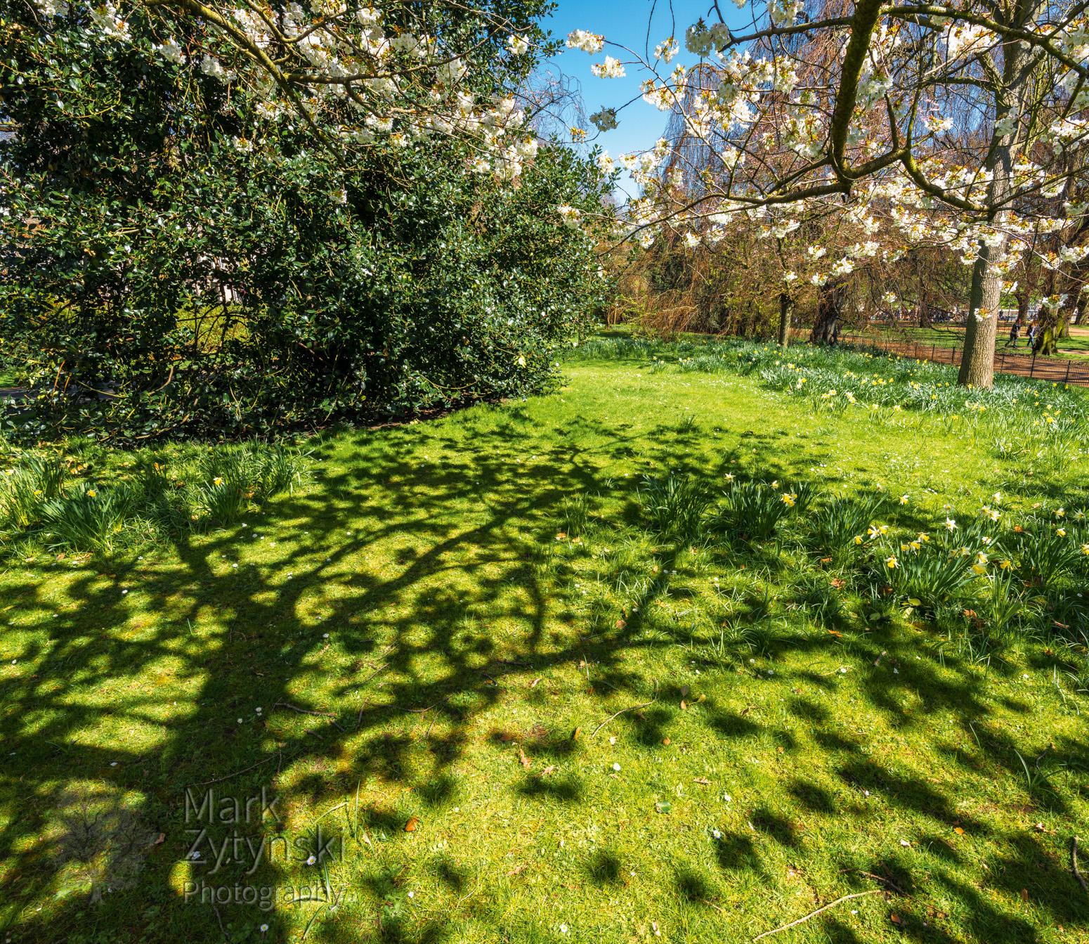 Cherry Blossom in Kensington Gardens Blog #3