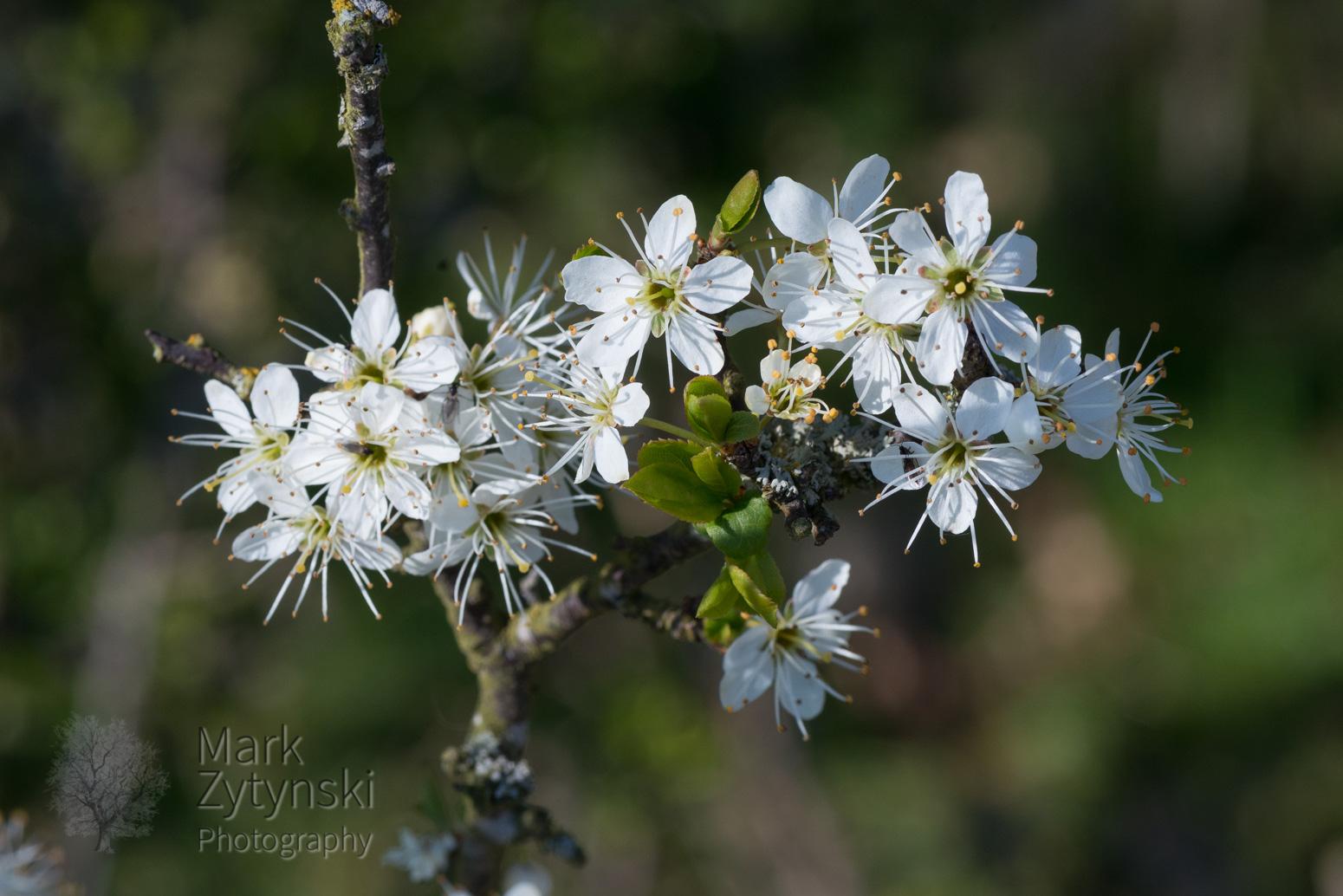 Blooming Trees Blog #2