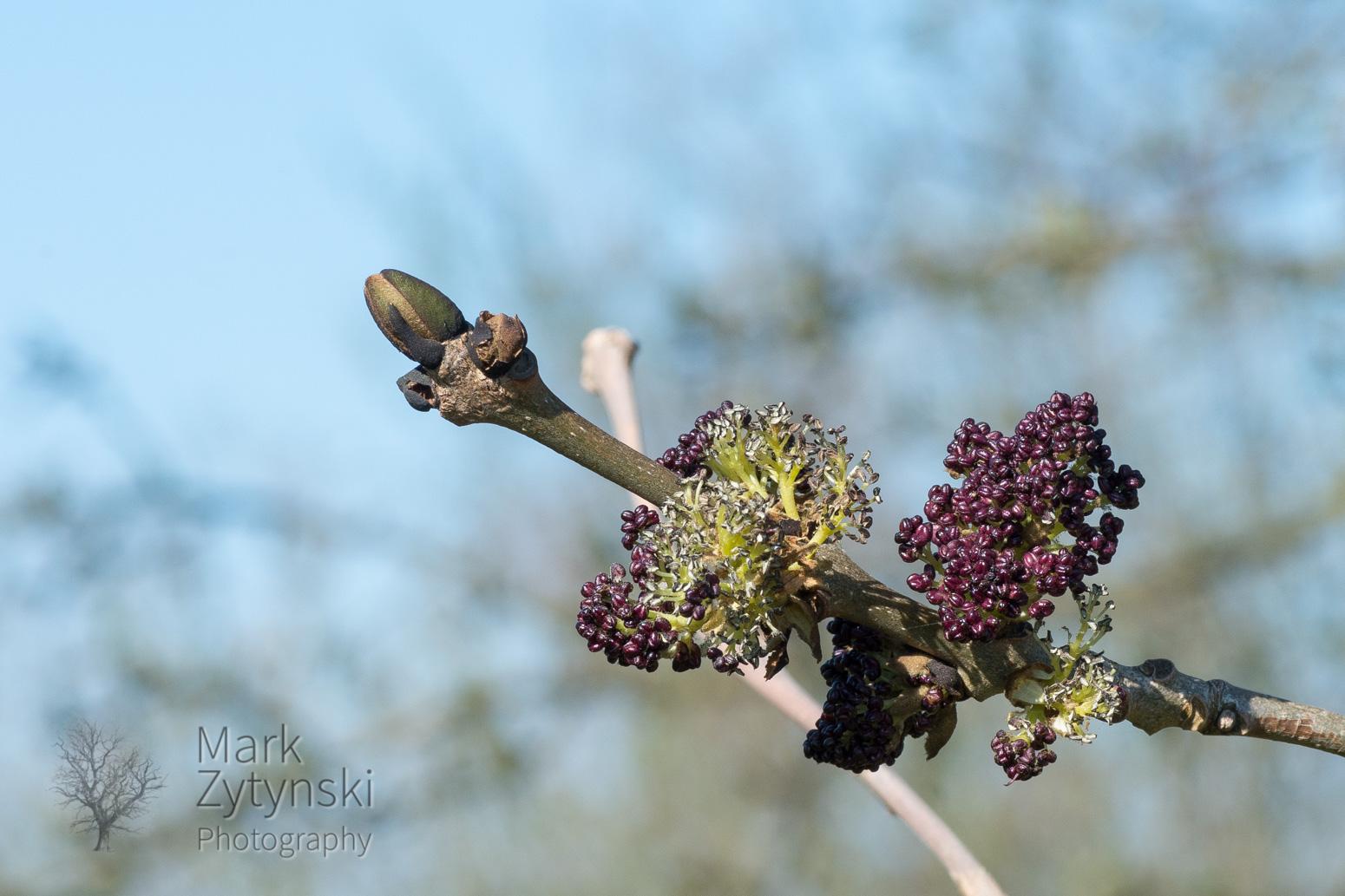 Blooming Trees Blog #1
