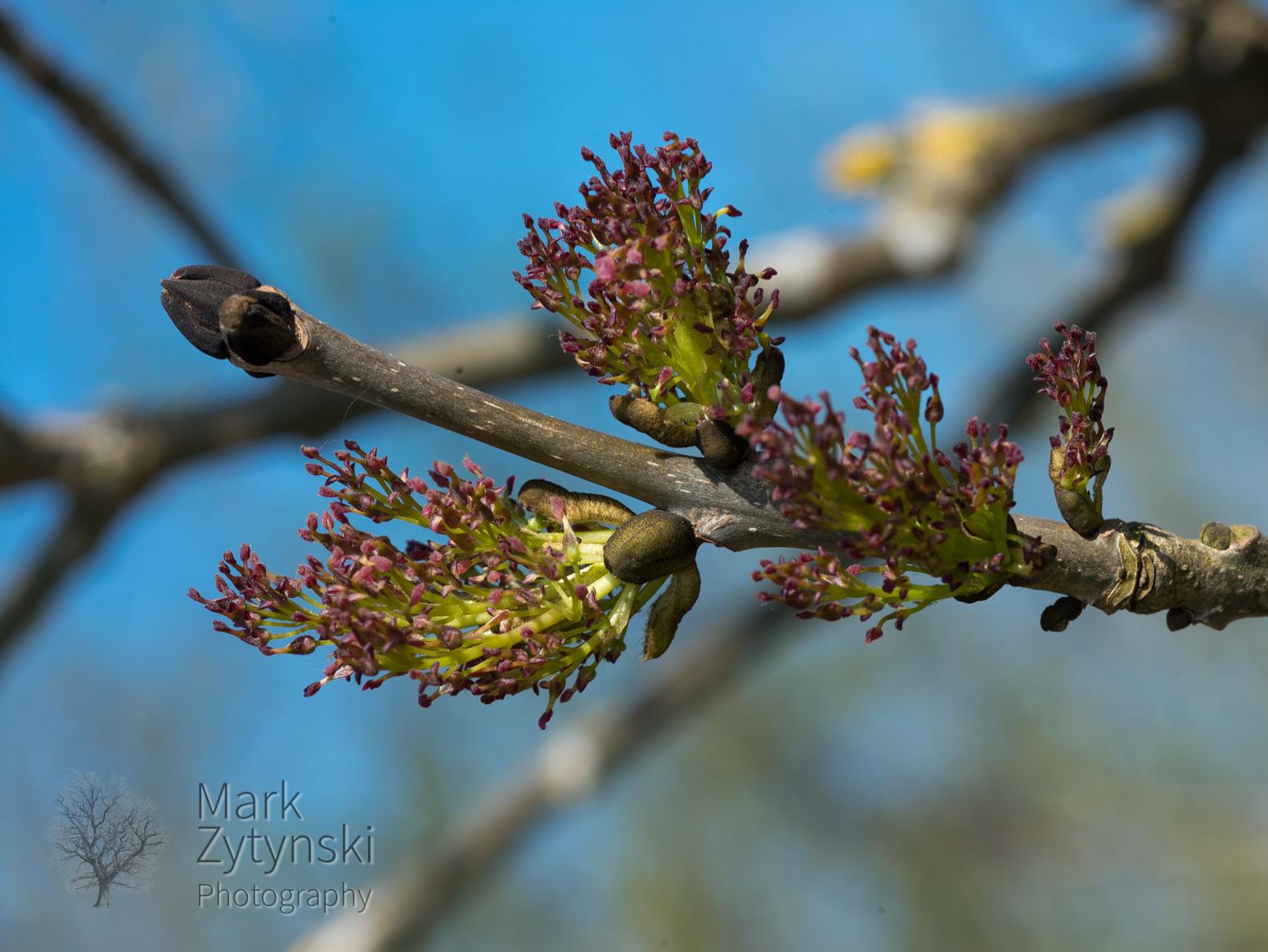 Blooming Ash Blog #3