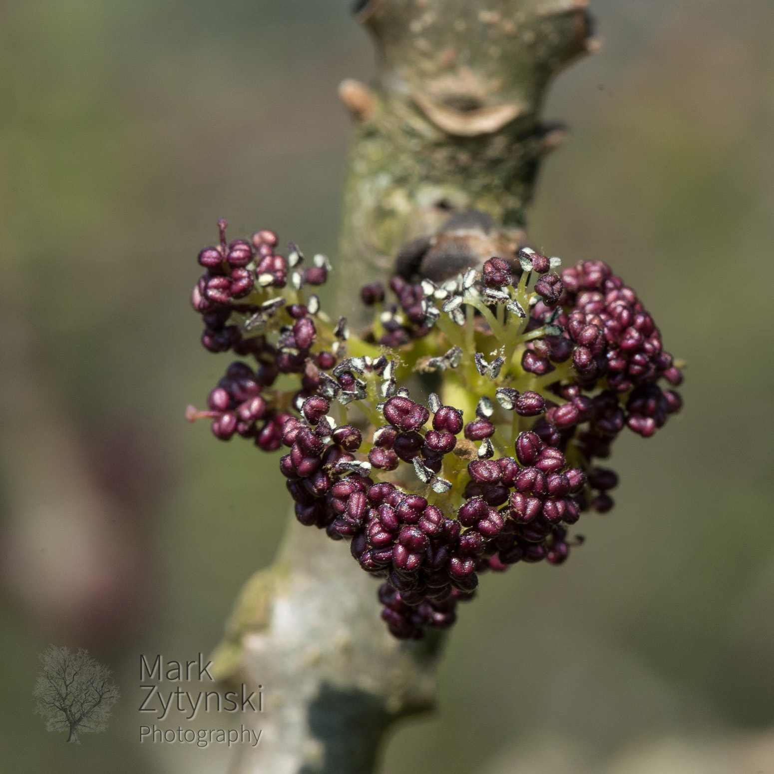 Blooming Ash Blog #5
