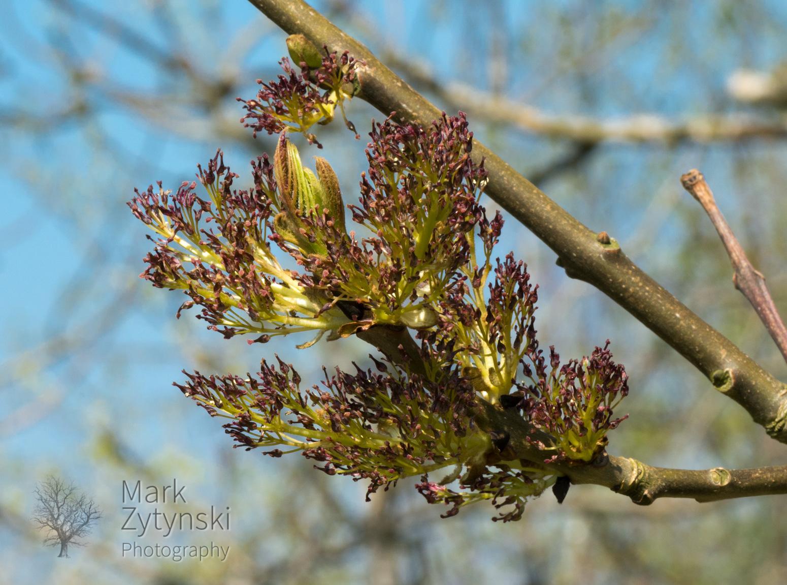 Blooming Ash Blog #4