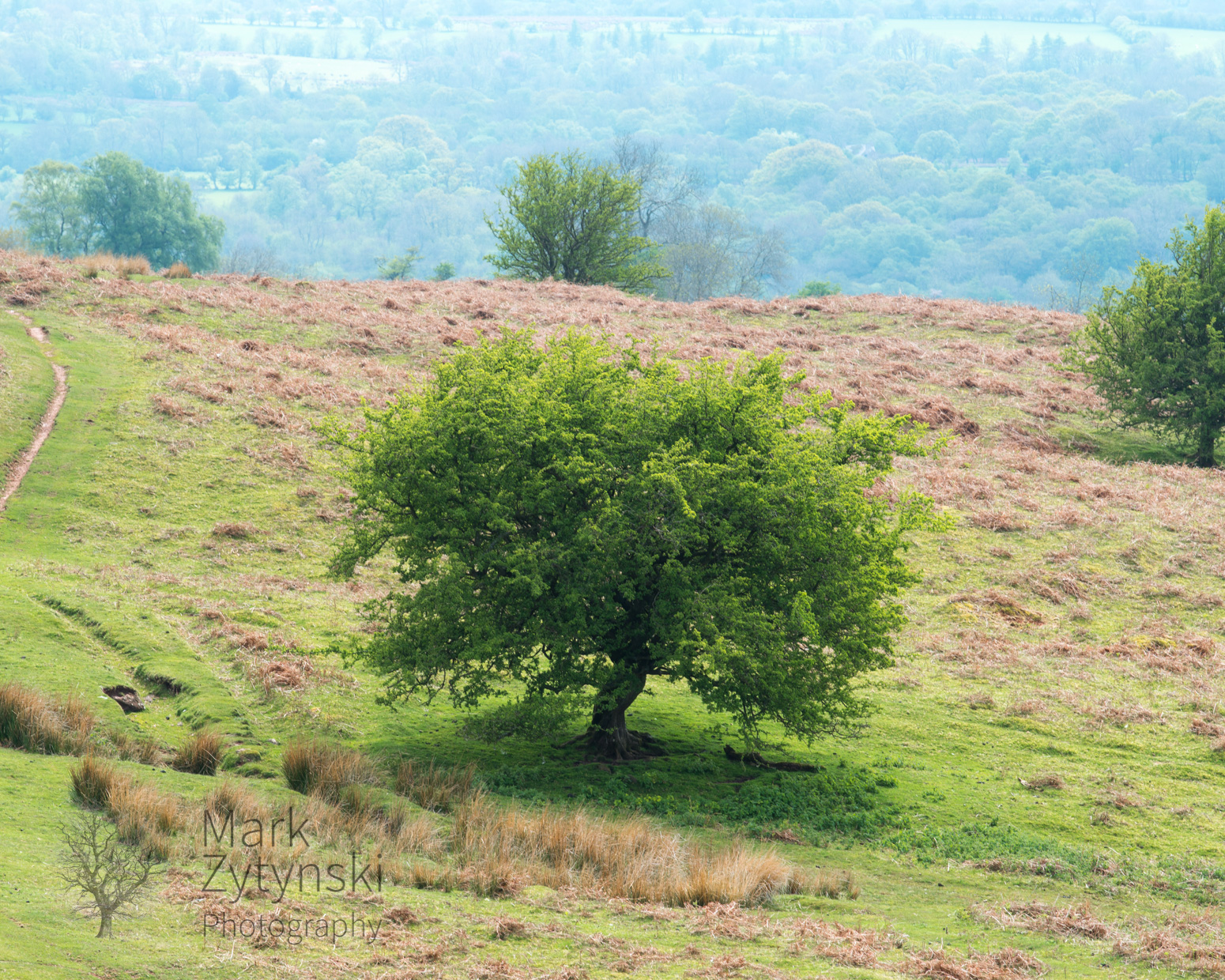 Black Mountains Treescapes Blog #1