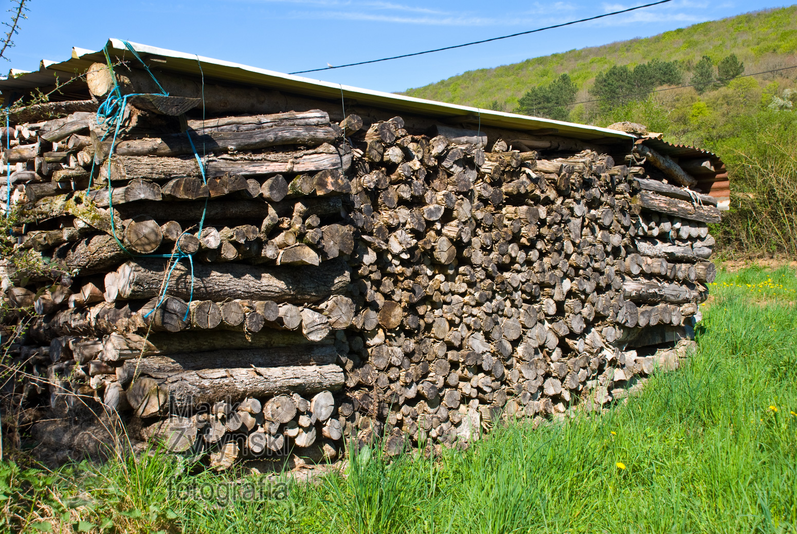 Zytynski-trees-logs-log-piles-5335.jpg