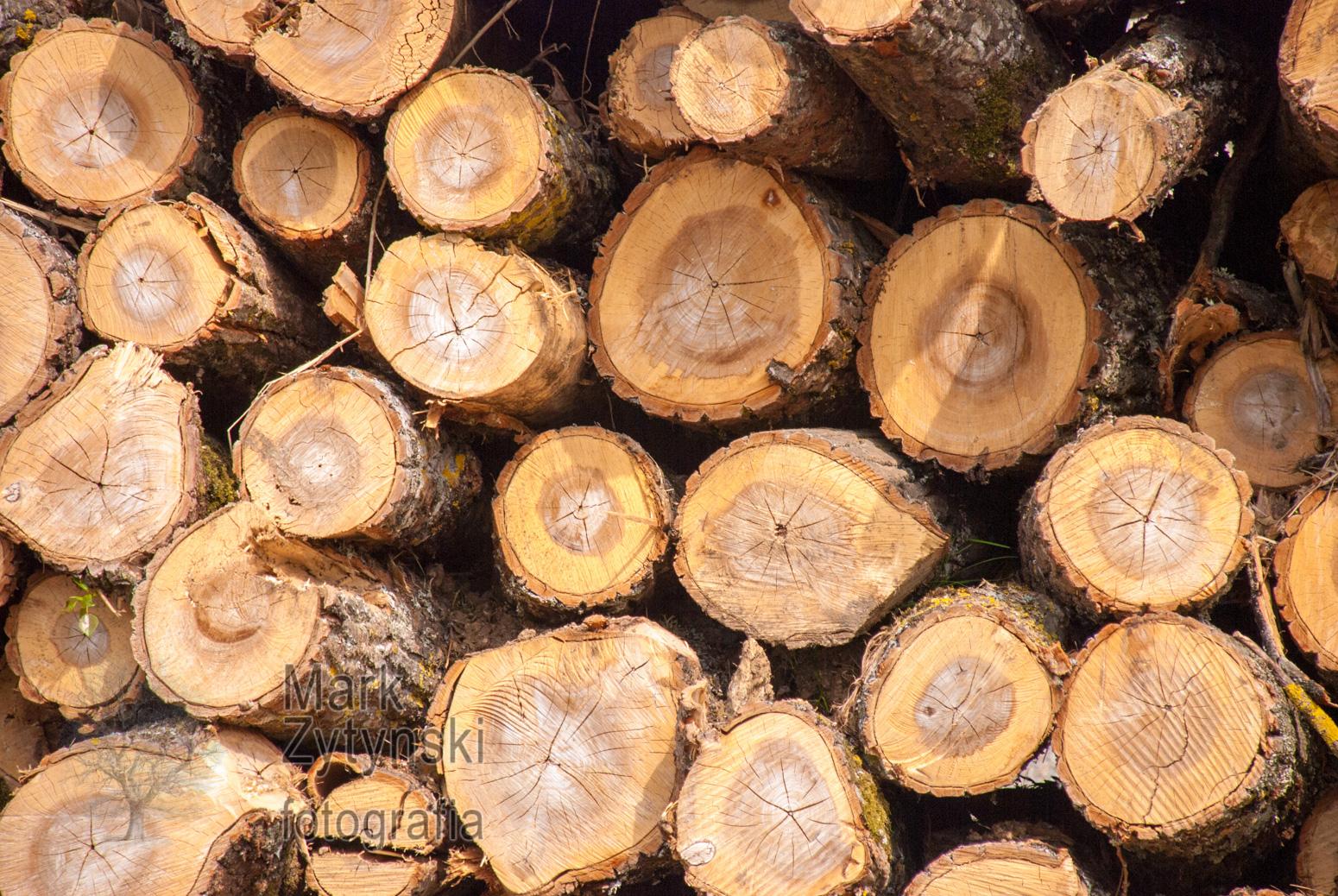 Zytynski-trees-logs-log-piles-5554.jpg