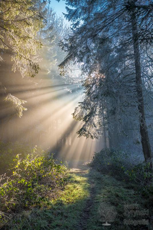 Zytynski-trees-fog-frost0465.jpg