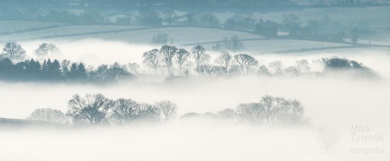 Zytynski-trees-fog--0346.jpg
