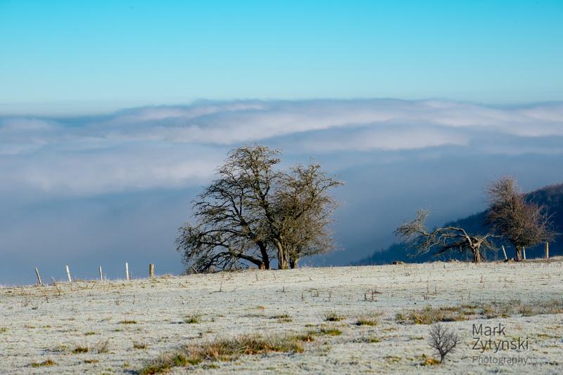 Zytynski-park-wood-fog-0328.jpg