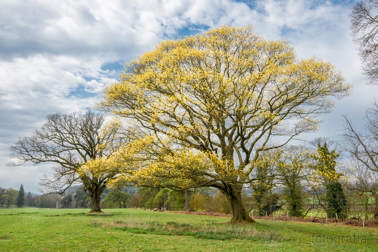 Zytynski-Curious-Quercus-2.jpg
