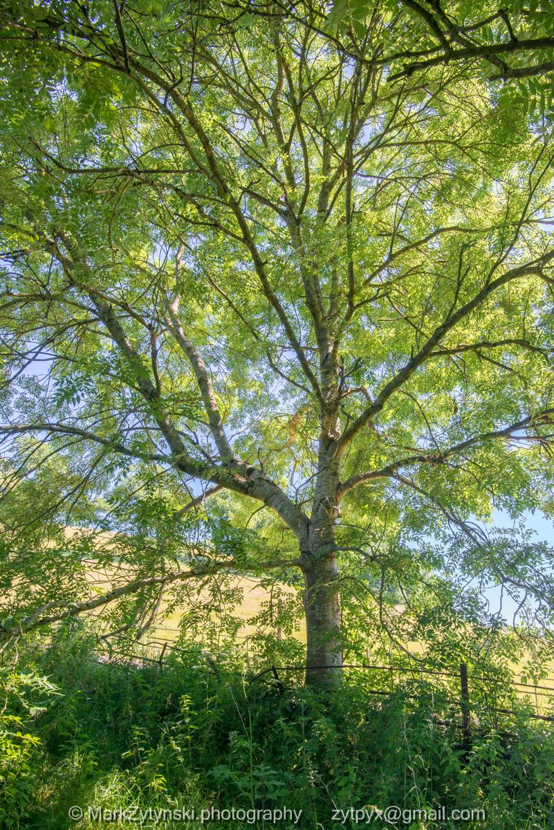 Zytynski-woodland-trust-5233.jpg