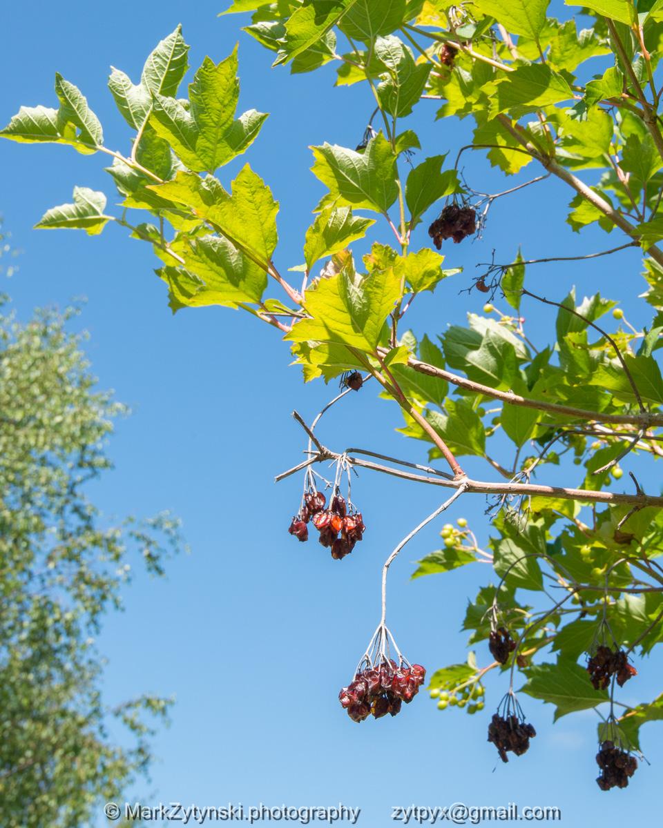Zytynski-woodland-trust-5255.jpg