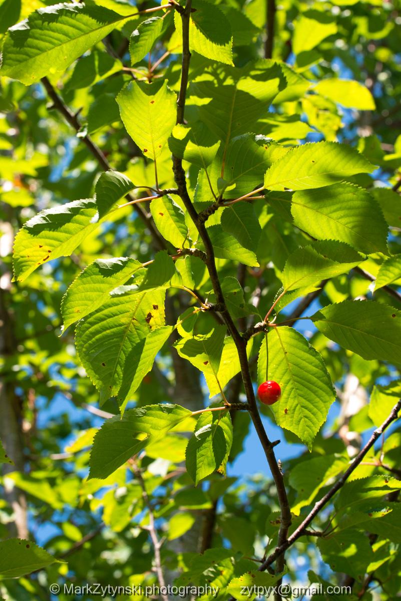 Zytynski-woodland-trust-5275.jpg