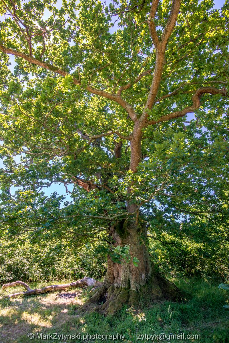 Zytynski-woodland-trust-5315.jpg
