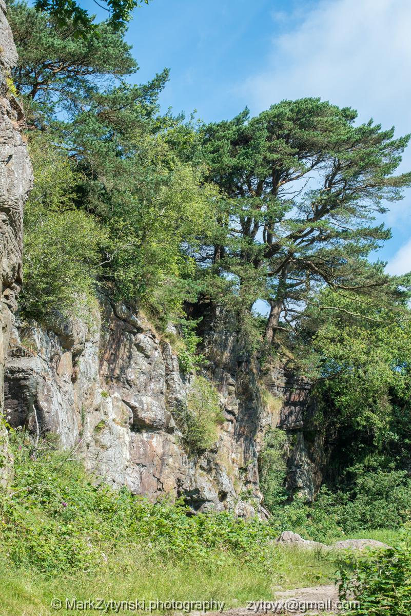 Zytynski-woodland-trust-4727.jpg