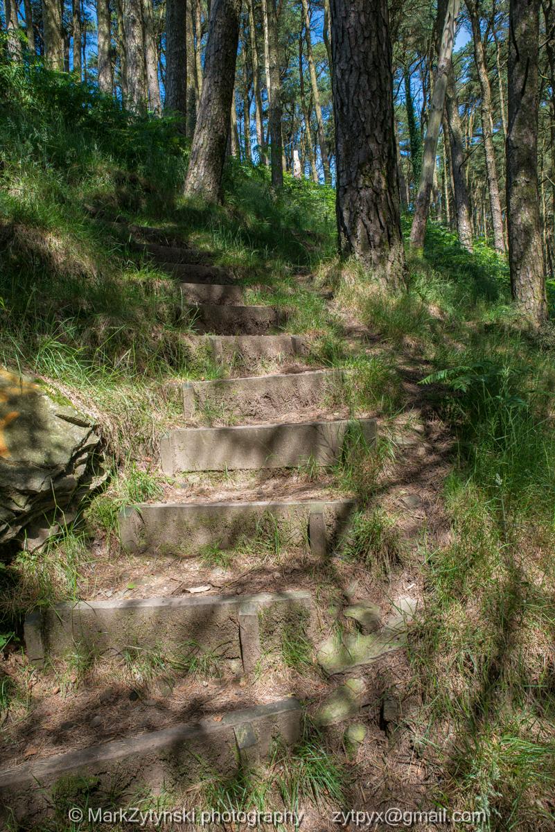 Zytynski-woodland-trust-4914.jpg