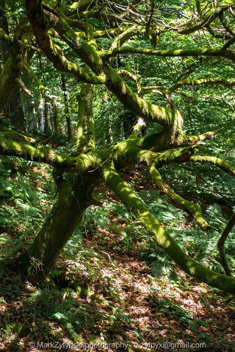 Zytynski-woodland-trust-4929.jpg