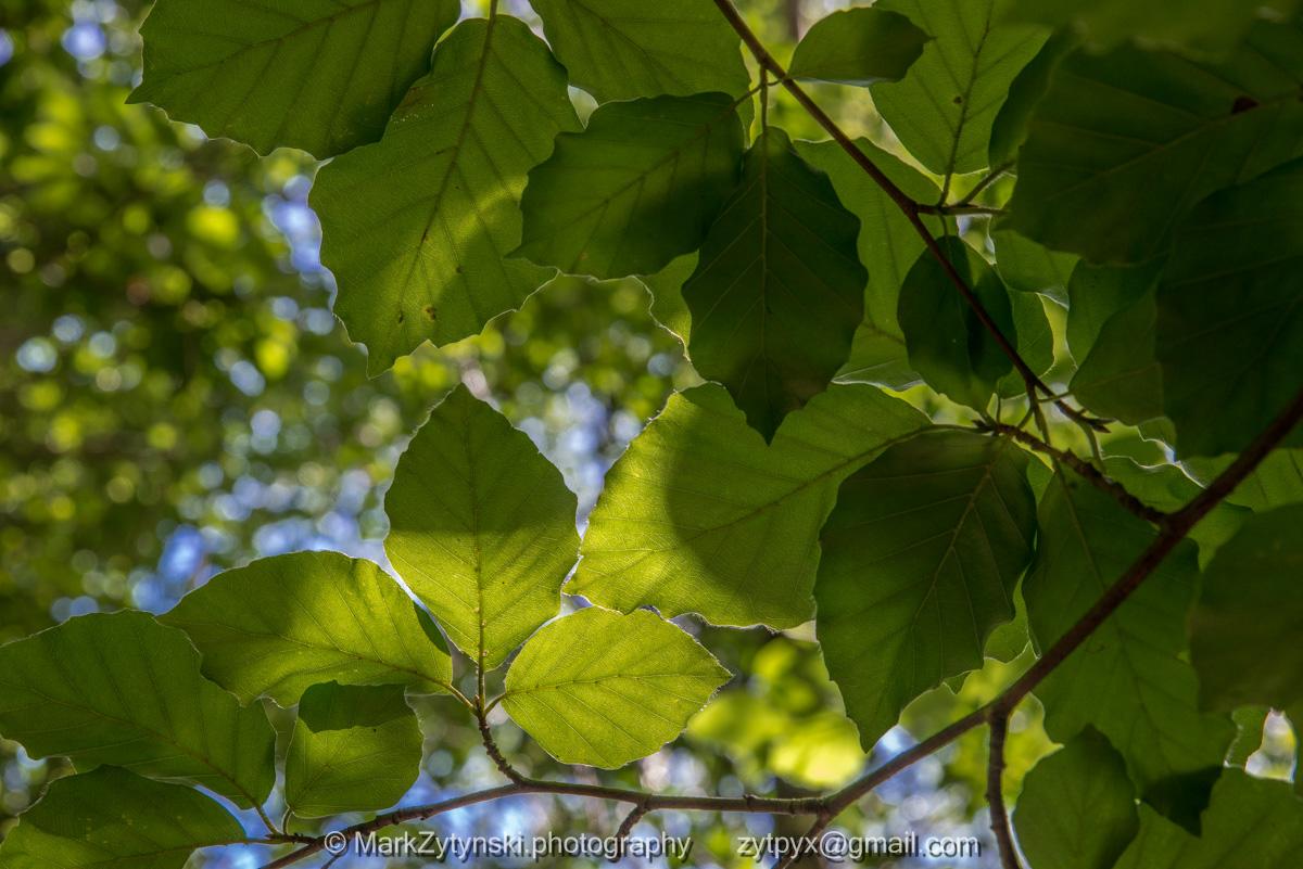 Zytynski-woodland-trust-4945.jpg