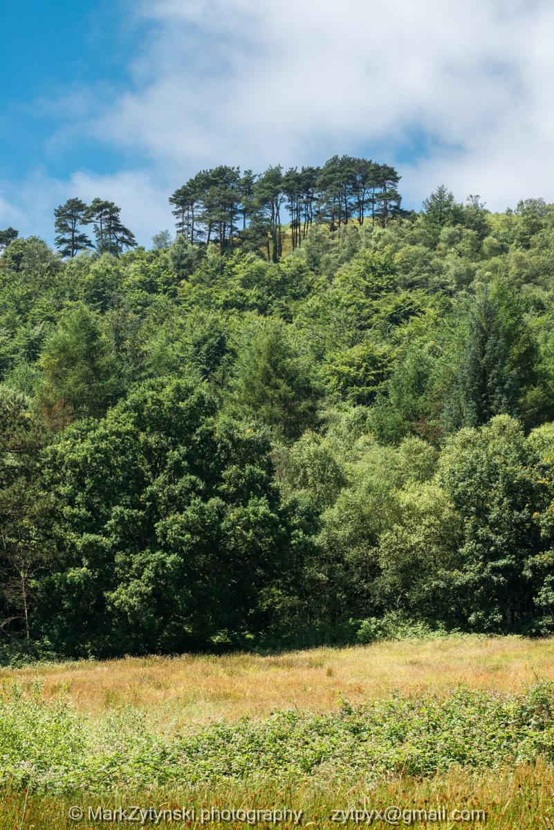 Zytynski-woodland-trust-5004.jpg