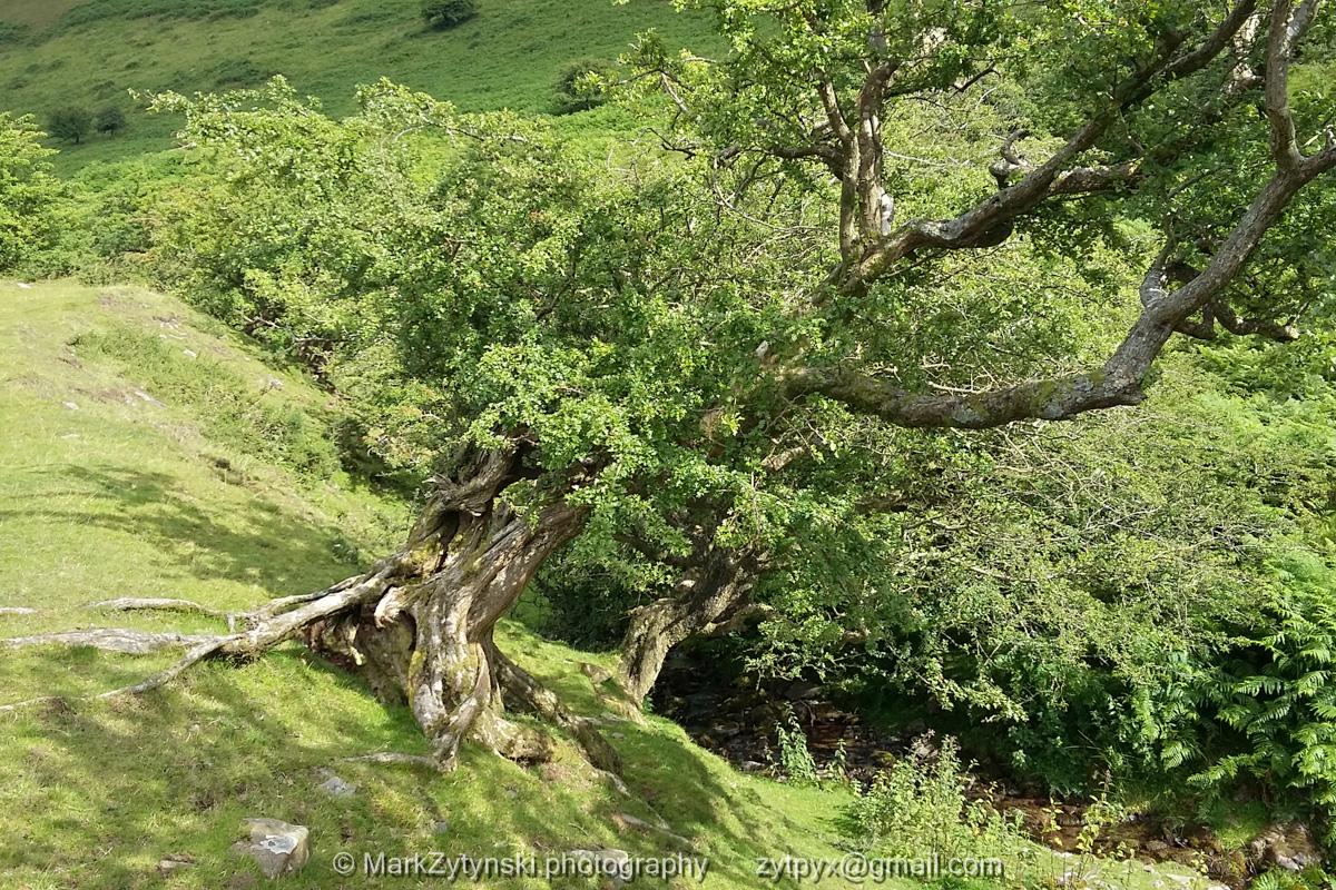 Zytynski-woodland-trust--3.jpg