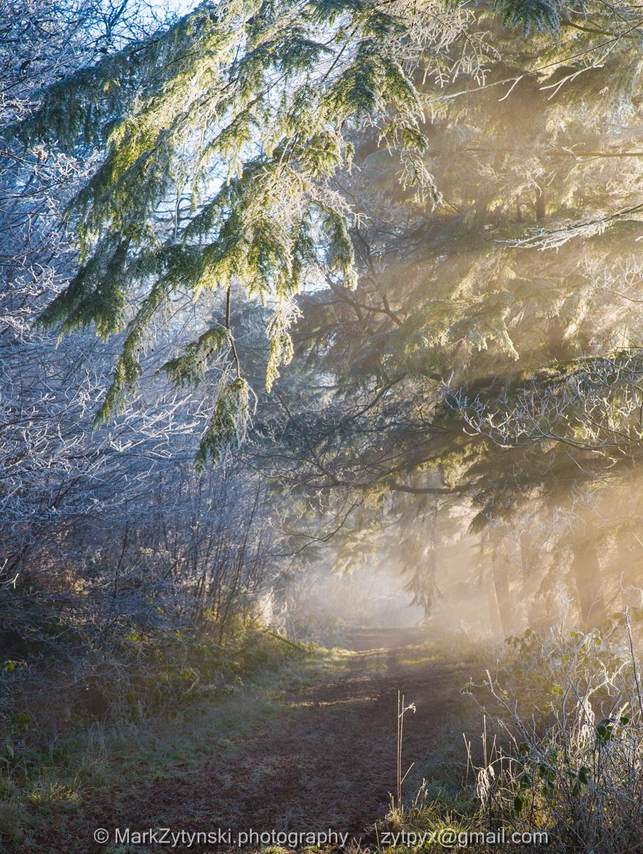 Zytynski-woodland-trust-0492.jpg