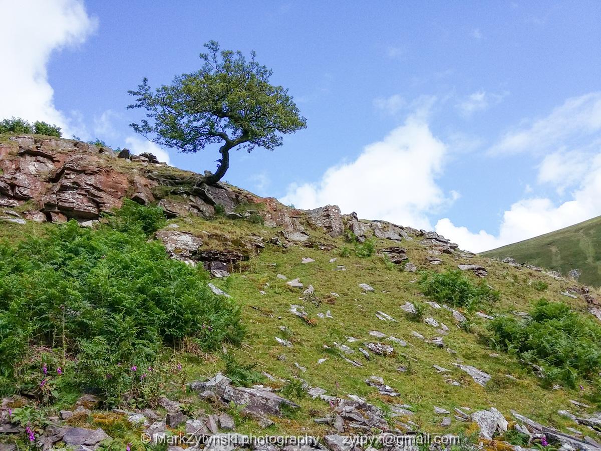 Zytynski-woodland-trust-163945.jpg