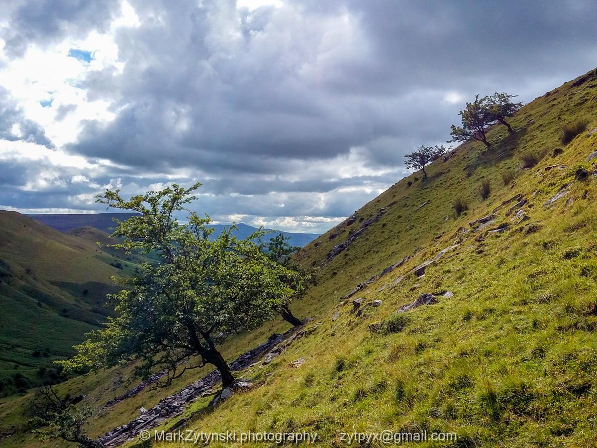 Zytynski-woodland-trust-164006.jpg