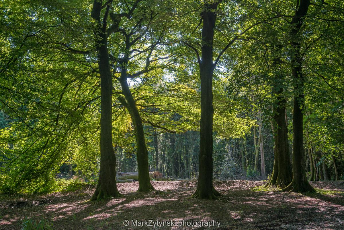 Zytynski-woodland-trust-5561.jpg