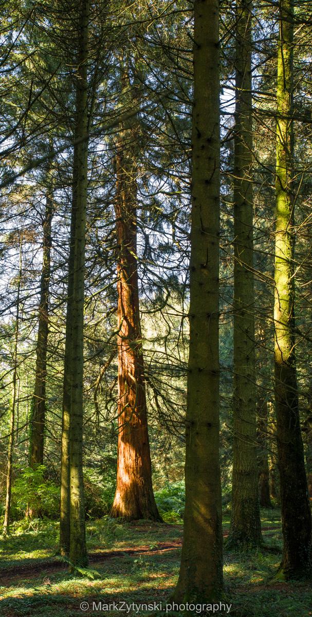 Zytynski-woodland-trust-5566.jpg